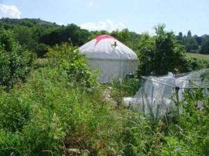 Yurt in the Sun