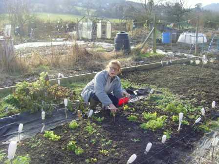 Lel volunteers weeding organic gardening